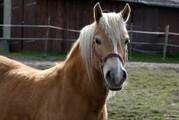 Ketschenbach Pferde